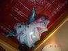 Copy_of_my_little_pony_balloon
